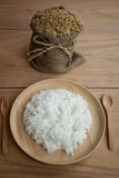 Arroz y arroz cocido al vapor en el plante Imágenes de archivo libres de regalías