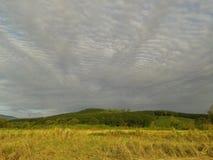 Arroz y cielo Imagenes de archivo