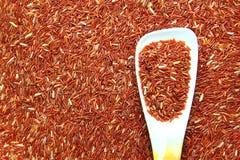 Arroz y cuchara rojos del jazmín Foto de archivo
