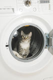 Arruela e gato de roupa Fotos de Stock