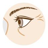 Arruga del ojo - parte del cuerpo, vista lateral ilustración del vector