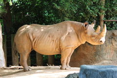 Arrugas del rinoceronte Fotografía de archivo