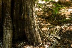 Arrugas del tronco de árbol Imágenes de archivo libres de regalías