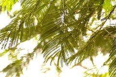 Arrugas soleadas del árbol verde del resorte plano foto de archivo