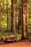 Arrugginendo via nella foresta delle sequoie fotografia stock