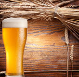 Ars of wheat & beer glass. Stock Photography