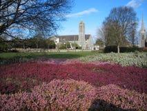 Arsenal del brezo púrpura Imagen de archivo libre de regalías