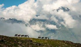Arsha Pass, Caucasus Mountains, Georgia. Arsha Pass on the trail to Mt Kazbek. Georgian men lead a team of horses along a distant ridge with the Caucasus stock photos