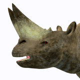 Arsinoitherium Mammal Head. Arsinoitherium was a herbivorous rhinoceros-like mammal that lived in Africa in the Early Oligocene Period Stock Photo