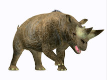 Arsinoitherium Mammal Side Profile. Arsinoitherium was a herbivorous rhinoceros-like mammal that lived in Africa in the Early Oligocene Period Stock Images