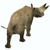Arsinoitherium Mammal Tail. Arsinoitherium was a herbivorous rhinoceros-like mammal that lived in Africa in the Early Oligocene Period Royalty Free Stock Image