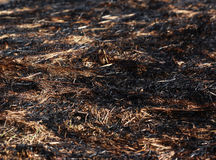 Arson burned dry grass background closeup photo Royalty Free Stock Photos