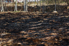 Arson dry grass, forest Royalty Free Stock Photography