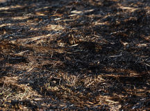Arson dry grass Stock Photos