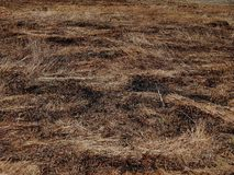 Arson grass in spring on the field Stock Photography