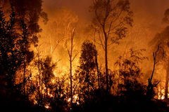 An Arsonists Paradise stock images