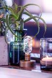 Artículos de la decoración de la bombilla y del cactus fotografía de archivo