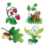 Artículos en existencia de la planta del bosque Imagen de archivo