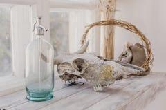 Artículos escandinavos del estilo cerca de la ventana, sifón de cristal, cráneo animal fotos de archivo libres de regalías