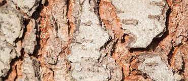 Art, abstract and artistic background pattern macro lens magnification view. Of tree bark in the forest royalty free stock photography