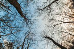 Art, abstract and artistic fisheye view. Forest and tree branch. Art, abstract and artistic fisheye lens perspective view of fantasy forest silhouette, sky and stock images