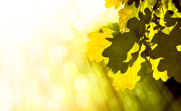 Art abstract autumn background Royalty Free Stock Photo