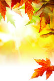 Art abstract Autumn background with leaves Stock Photography