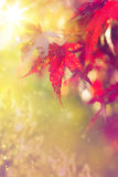 Art abstract autumn background. Art abstract autumn tree  nature  background Stock Images