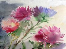Watercolor art background colorful blue pink aster flower bouquet still life painting. Art abstract background executed watercolor. textured nature decoration Royalty Free Stock Images