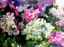 Watercolor art background colorful summer flower bouquet violet phlox. Art abstract background executed with watercolors .   delicate branch phlox bright wet Royalty Free Stock Photos