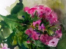 Watercolor art background colorful summer flower branch violet phlox. Art abstract background executed with watercolors .   delicate branch phlox bright wet wash Royalty Free Stock Image