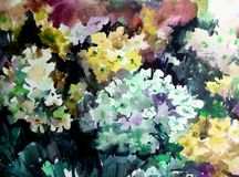 Watercolor art background colorful summer flower yellow violet white lilac phlox. Art abstract background executed with watercolors . delicate lilac phlox bright Stock Photos