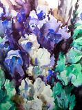 Watercolor art background blue violet iris flowers bouquet vivid. Art abstract background executed with watercolors .  iris flowers bright wet wash textured Royalty Free Stock Image