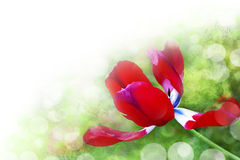 Art abstract background with spring floral motive. For design Stock Illustration