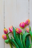 Art abstract background spring tulips wooden design Stock Photos
