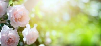 Art Abstract-de lente of de zomer bloemenachtergrond Royalty-vrije Stock Afbeeldingen