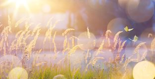 Art abstract September sunny autumn meadow background Stock Photos