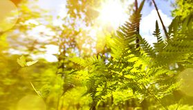 Abstract September sunny autumn nature background stock photos