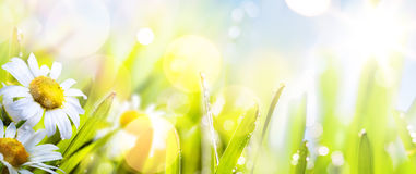 Art abstract sunny  springr flower background. Art abstract background spring summer flower in grass Royalty Free Stock Images