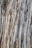 Abstract wood Texture background. Art abstract wood Texture background Royalty Free Stock Images