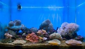 The art of aquarium Stock Images