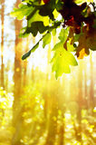 Art autumn background with leaves Stock Images