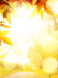 Art autumn backgrounds with yellow leaves stock photography