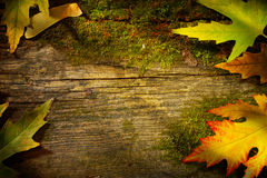 Art autumn leaves on  old wood background Stock Photos
