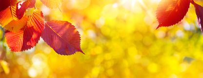 Free Art Autumn Leaves On The Sun. Blurred  Sunny Fall Background Royalty Free Stock Image - 160057516