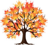 Art autumn tree. Maple. Vector illustration. Stock Photos