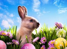 Art baby Easter bunny on spring green grass Stock Image