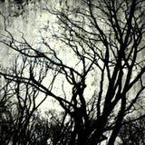 Art background. Tree autumn botamy Royalty Free Stock Photos