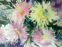 Watercolor art background delicate colorful nature flowers asters bouquet fresh romantic Royalty Free Stock Images