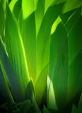 Art Background leaves green Stock Photography